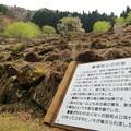 桑畑跡の石垣