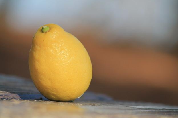 レモン 檸檬 LEMON