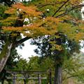 写真: 秋の荻ノ島2