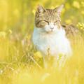猫ちゃん、菜の花と・・