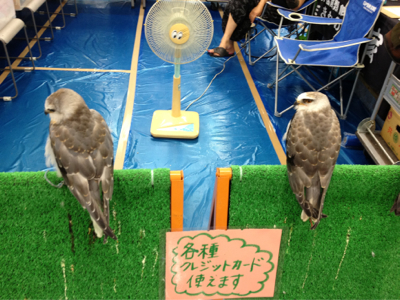 Photos: 猛禽類