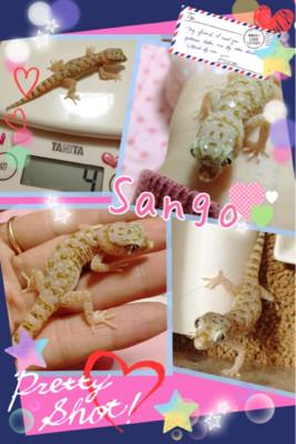 珊瑚、4g☆