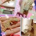 写真: 珊瑚、4g☆