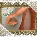 写真: The Snake
