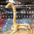 写真: しろうくんオメガ顔(・ω・)