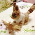 写真: コハクとテト2
