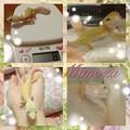 写真: 新入りミモザ☆
