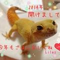 写真: リラ2014☆