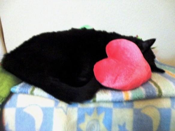 Photos: Ekkun_Sleeping-Nov2012