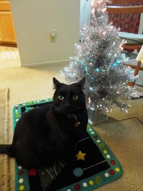 Ekkun&Christmas_Mat-Dec2012