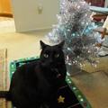 Photos: Ekkun&Christmas_Mat-Dec2012