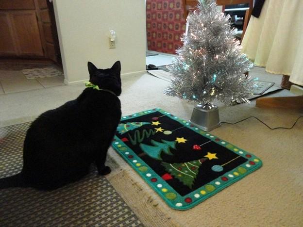 Ekkun&ChristmasMat-Dec2012