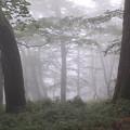 写真: 霧の森