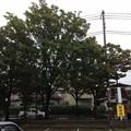 Photos: お店の前の木 (^_-)-☆