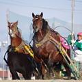 写真: キタノメイユウと村上騎手