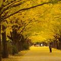 写真: 黄色に包まれて・・・♪
