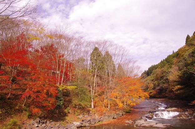 写真: 遊水峡の紅葉?♪