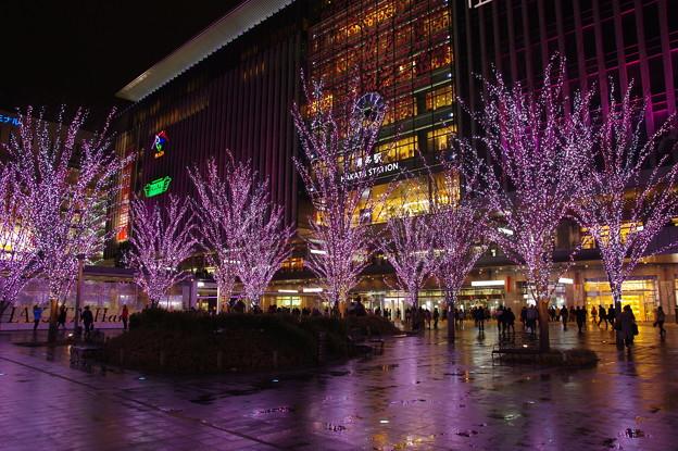 写真: 桜咲く(^0^)