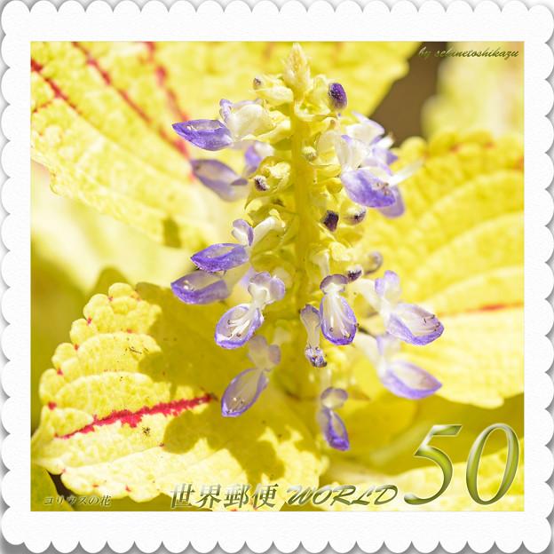 <花切手*コリウスの花 in 森林公園>