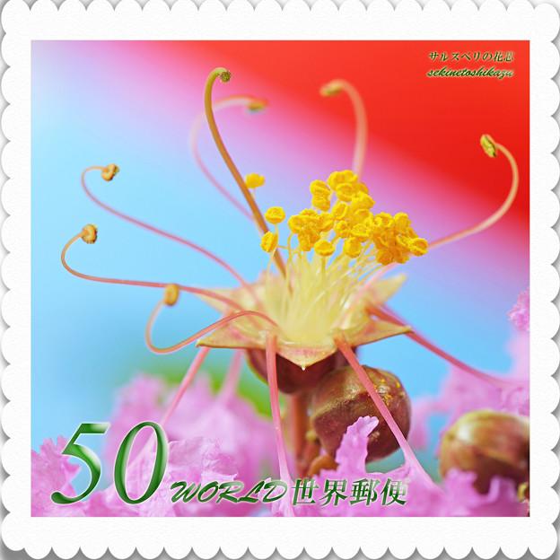 <花切手2013-22>*サルスベリの花芯