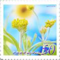 花切手<2013-30>*秋のハハコグサ