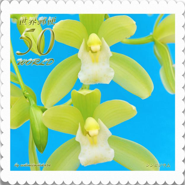 花切手<2013-36>*シンビジウム・緑の微風