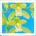 Photos: 花切手<2013-36>*シンビジウム・緑の微風