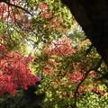 伊野神社2012秋