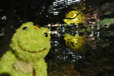 日比谷公園ライトアップ(2013-11-29-4)