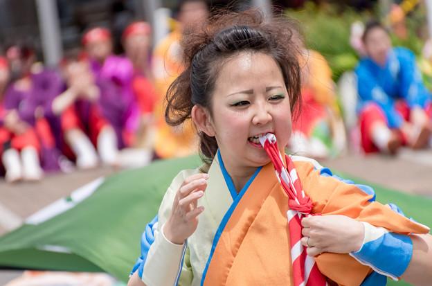 草津エイスクエアよさこい2016.5.8 近江笑人