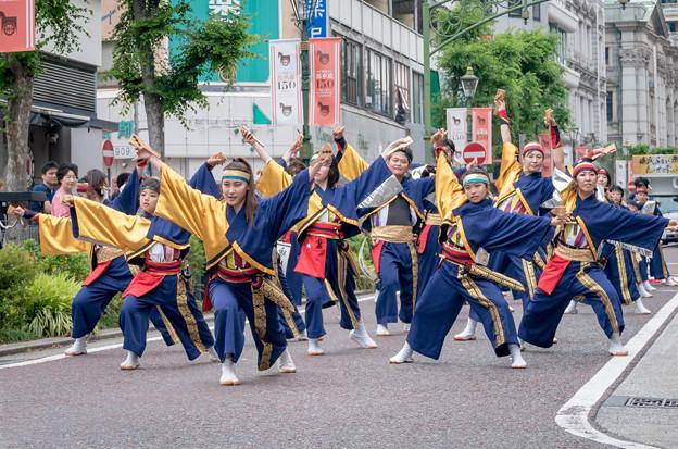 横浜よさこい祭り2016 K-one動流夢