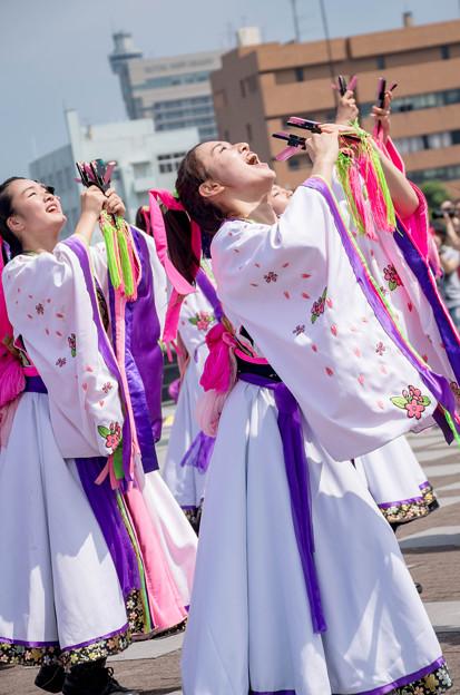 横浜よさこい祭り2016 dance company REIKA組