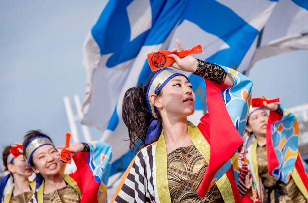 横浜よさこい祭り2016 祭 ・WAIWAI よこはま