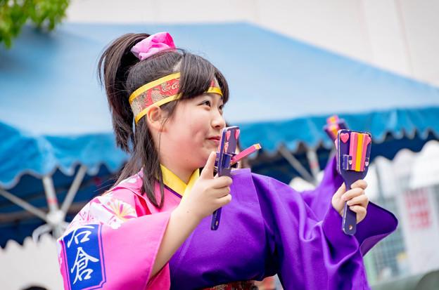 犬山踊芸祭2016 岩倉鳴子おどりの会 五条川桜