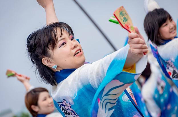 横浜よさこい祭り2016 くまがや鳴子会 熊舞