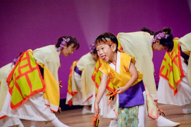 堺よさこい かえる祭り2016 大阪泉州よさこい連 彩
