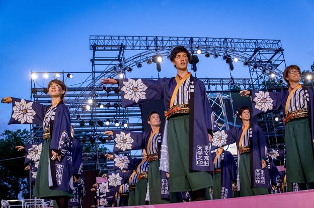 にっぽんど真ん中祭り2016 東京理科大学Yosakoiソーラン部