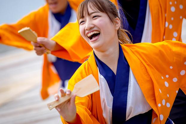 ゑぇじゃないか祭り2016 桃山学院大学 よさこい連「真輝-SANAGI-」