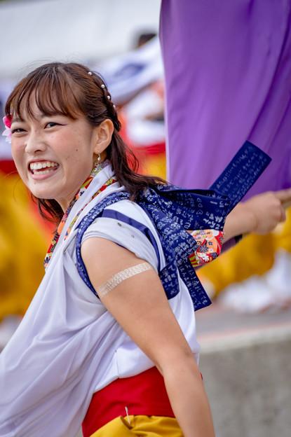 神戸アライブ2016  よさこいチーム炎~ほむら~
