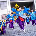 写真: ドリームよさこい2016 REDA舞神楽