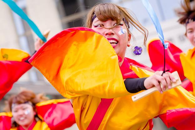 写真: 藤井寺元気祭り2017 大阪教育大学凜憧