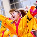 藤井寺元気祭り2017 大阪教育大学凜憧