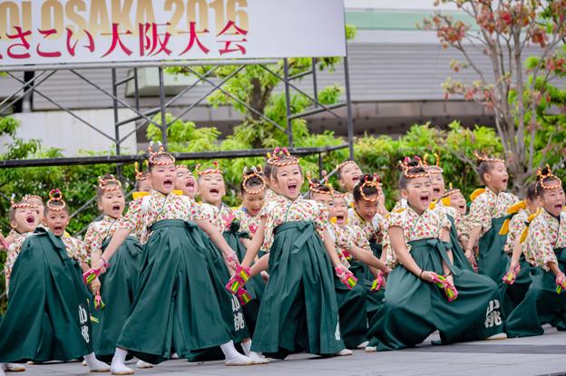 よさこい大阪大会2016 小桃