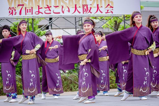 よさこい大阪大会2016 河内連