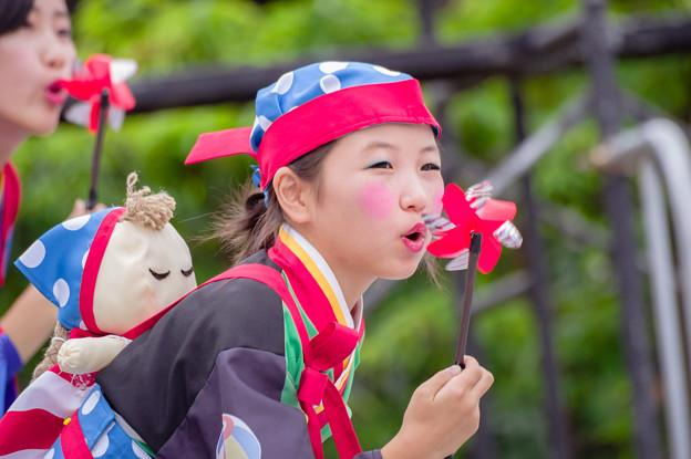 よさこい大阪大会2016 こねくしょん