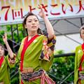 よさこい大阪大会2016 おどらんや