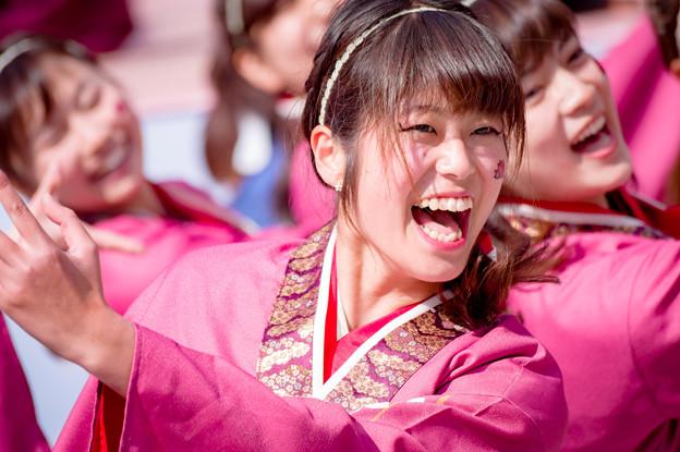 京都さくらよさこい2017 大阪市立大学チーム朱蘭