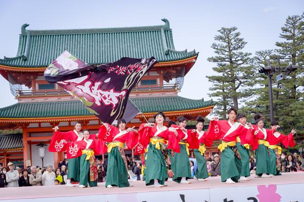 京都さくらよさこい2017 バサラ風流倭尽心舞