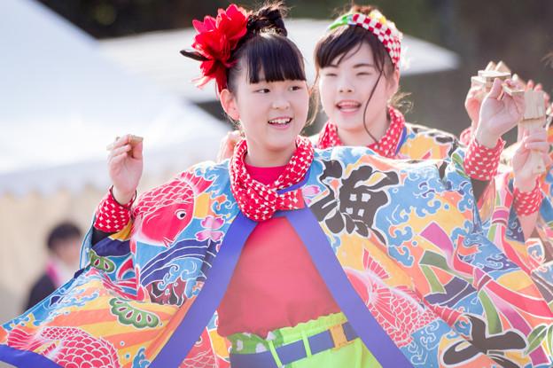 京都さくらよさこい2017 なかとさもん