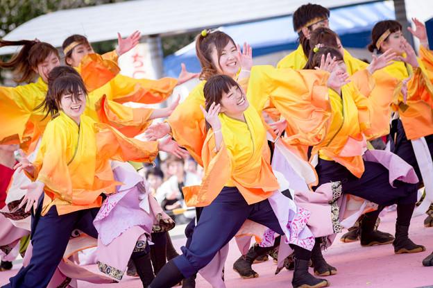 京都さくらよさこい2017 同志社大学 京都よさこい連 心粋